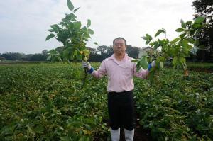 枝豆の収穫2